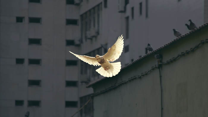 The (Forgotten) Story of the Holy Spirit